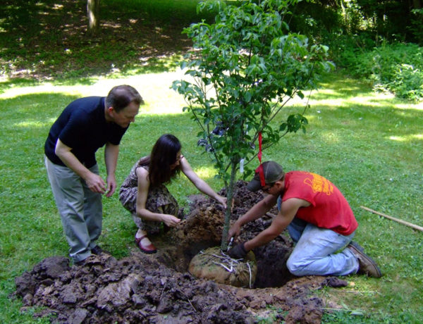 Transplant a Tree 101: What You Need to Know