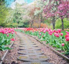 8 Benefits of Gardening in shade