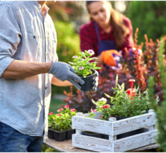 Backyard on a Budget: How to Save Big When Doing Outdoor Projects
